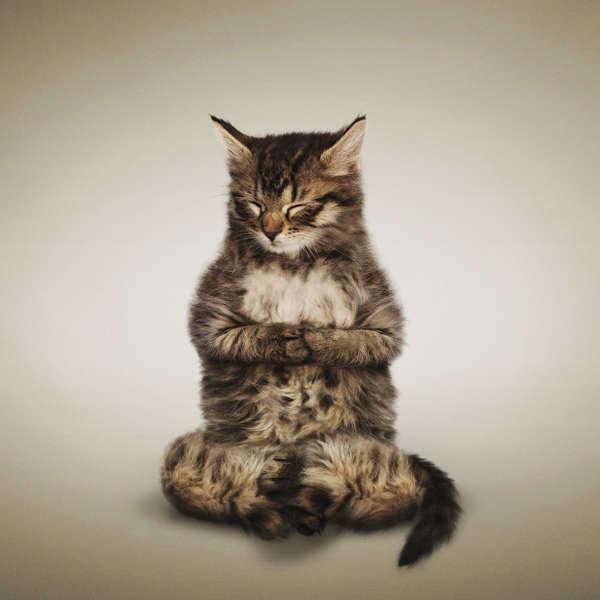 Flexing Feline Photography