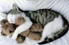 Adorable Pet Photoblogs