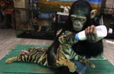 Maternal Milk-Feeding Monkeys