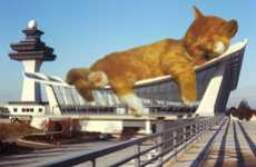 Kitty Architecture Blogs