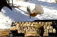 Avian Social Media Art Projects