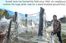 60 Acre Spider Web