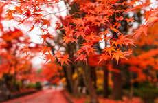 Vibrant Seasonal Landscape Photography