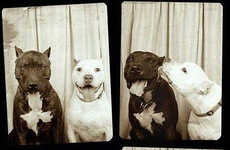 Canine Photo Booth Photography