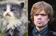 Feline Fantasy Character Comparisons