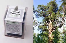 Bonsai Tree Kits
