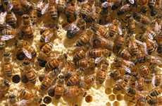 Drug-Detecting Honeybees