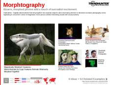 Art Photography Trend Report Research Insight 3