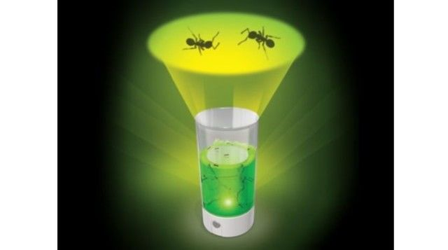 Luminescent Insect Farms