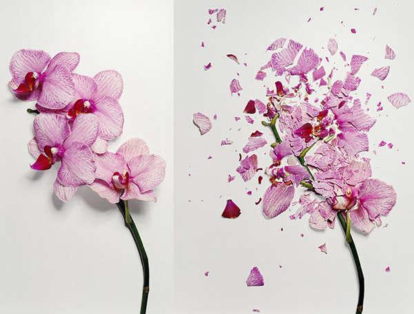 Fractal Flower Photos