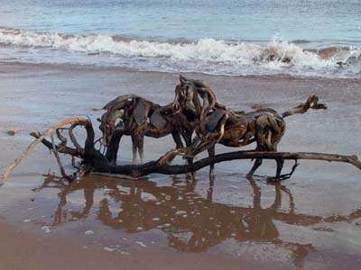 Horses From Driftwood