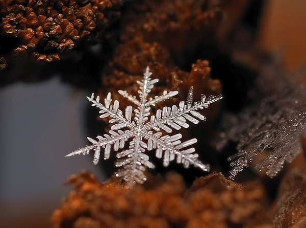 Microscopic Snowflake Pictures