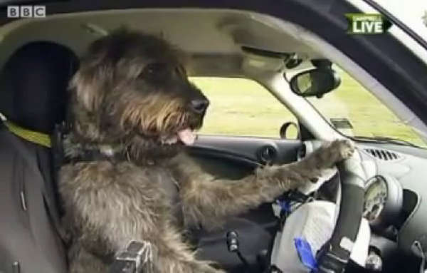 Dogs Drive Cars