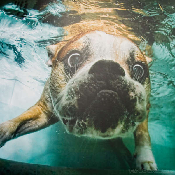 Playful Underwater Pups