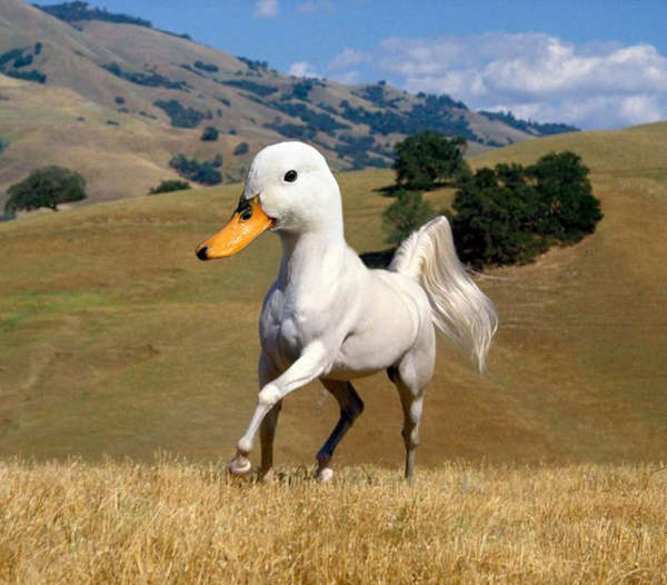 Trippy Animal Mash-Ups