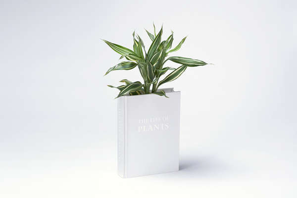 Literary Plant Holders