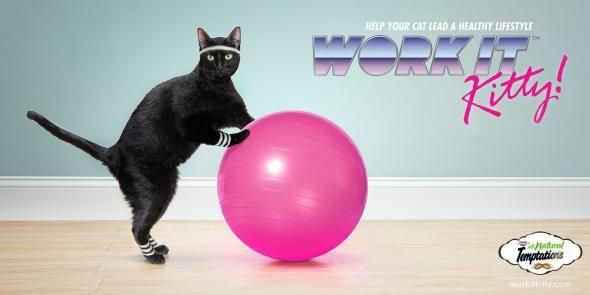 Fit Feline Campaigns