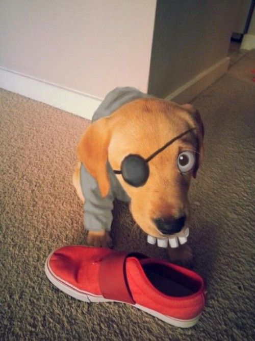 Hilarious Face Painted Puppies