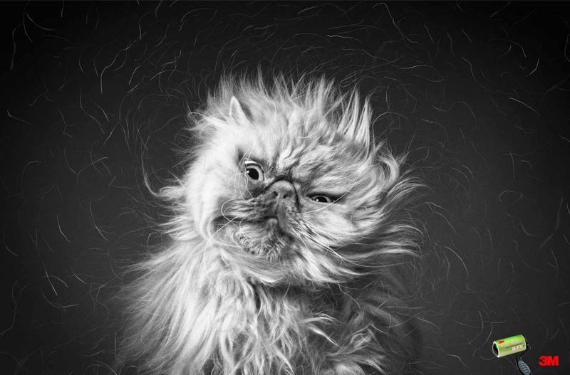 Shedding Pet Photography